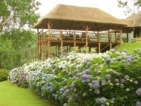 hydrangea house hilton